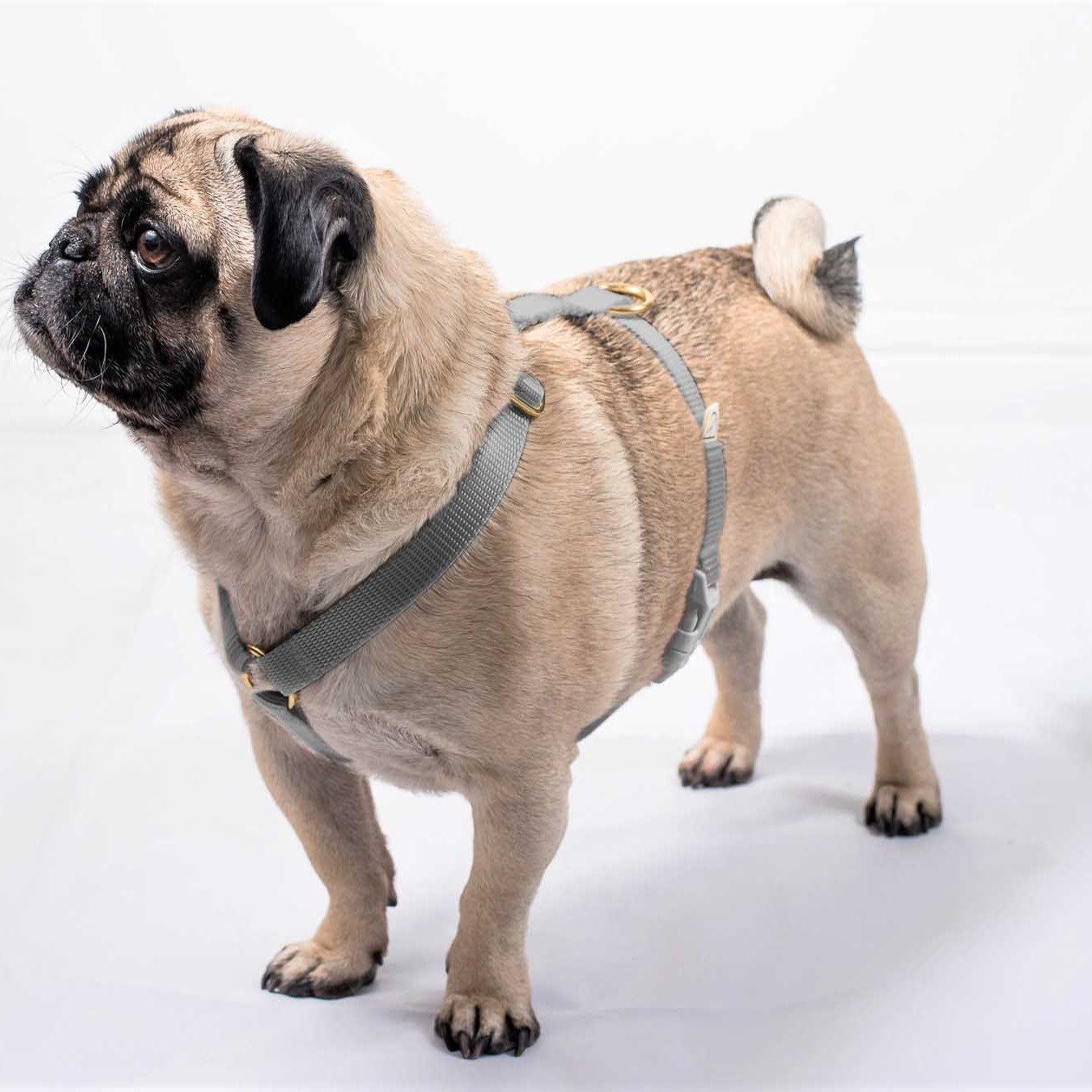 grey bespoke dog harness