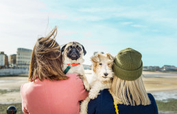about doggie apparel
