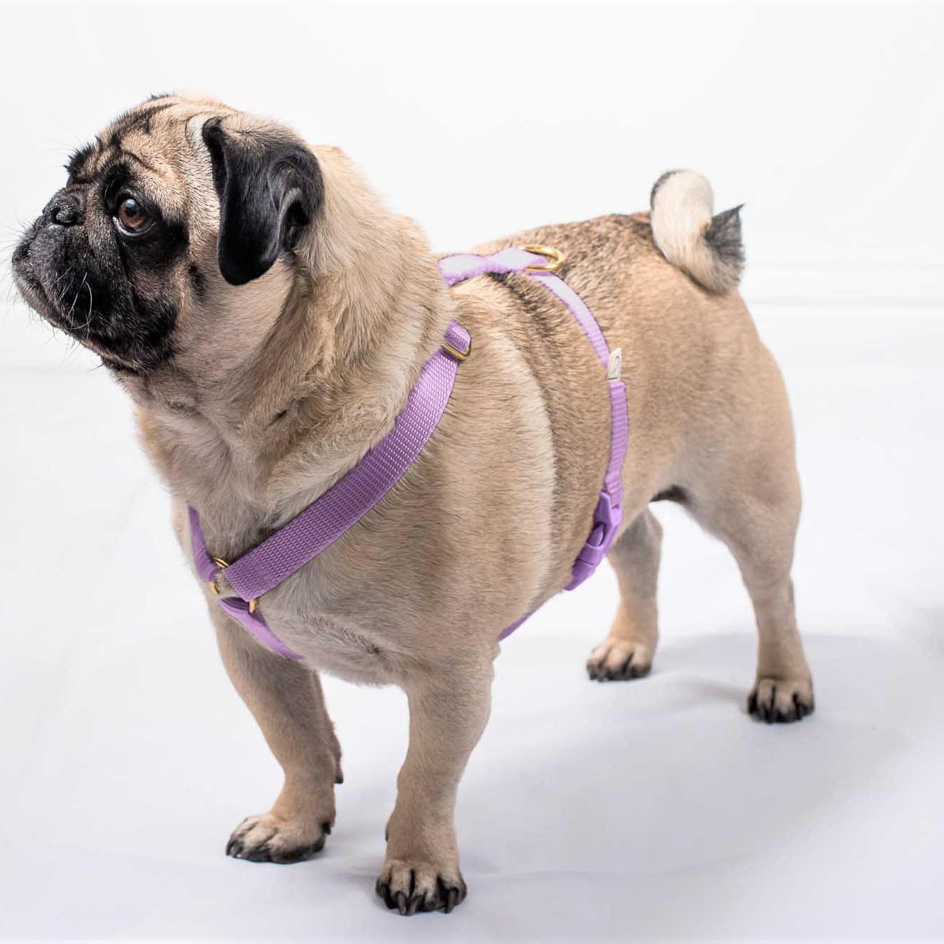 doggie apparel single webbing harness