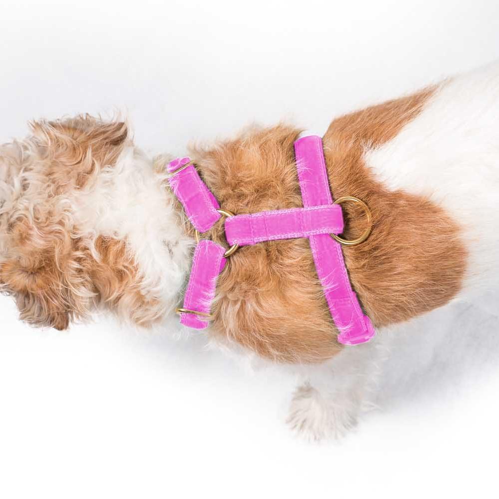 'queen' pink velvet harness