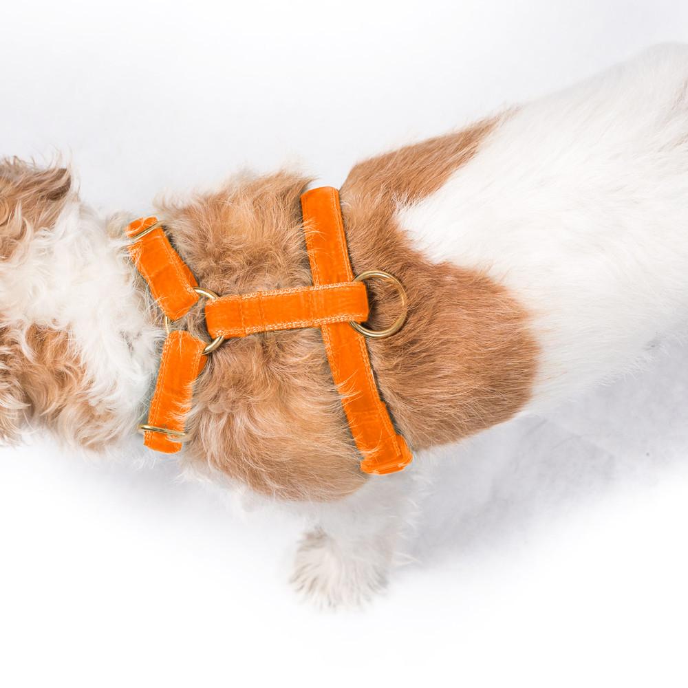 luxury velvet dog harness